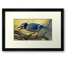Hey - I want some peanuts !  Framed Print