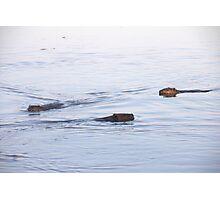 Beaver Family  Photographic Print