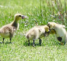 I know your quacking about me! by Heather King