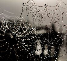 Spider Webs by Stonerodger