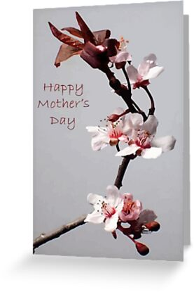 Pink Plum Blossom With Happy Mother's Day Greeting by taiche