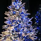 Snowy Tree with Blue Lights and its Reflection by Jane Neill-Hancock