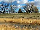 Duck's Paradise by Greg Belfrage