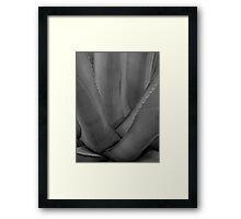 Agave 1 (black & white) Framed Print