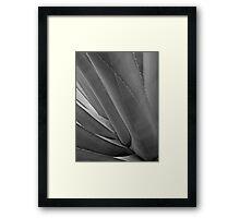 Agave 2 (black & white) Framed Print
