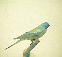Bird Study #3 by Cassia Beck