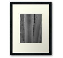 Agave 3 (black & white) Framed Print