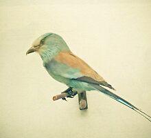 Bird study #2 by Cassia Beck
