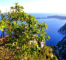 The View From Eze by Fara