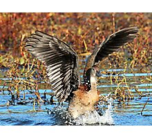 Cleared for take-off! Photographic Print