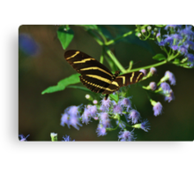 Florida butterfly Canvas Print