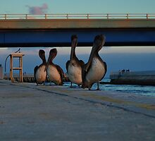 Four Pelicans by khphotos