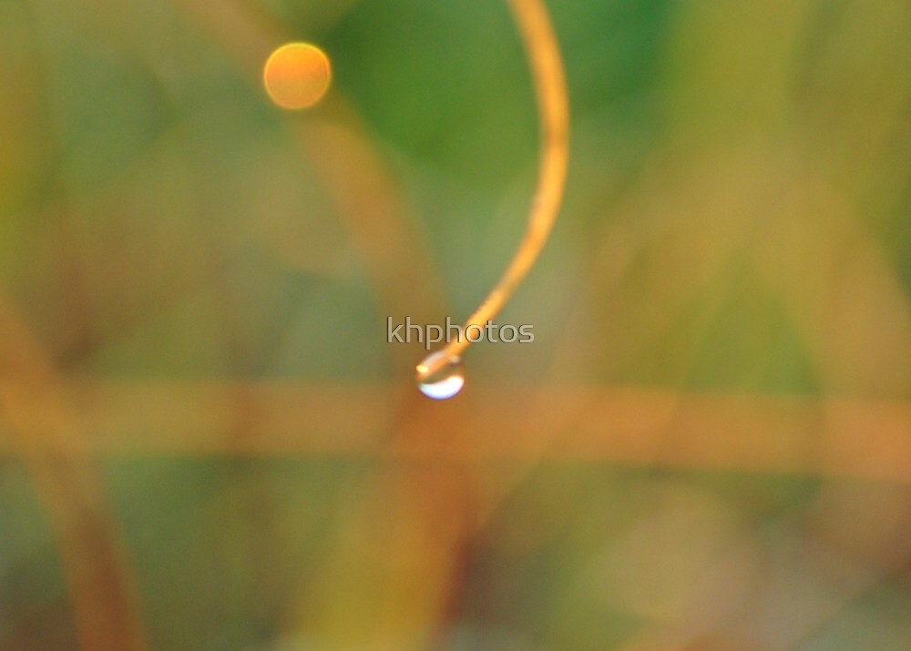 Dew Drops by khphotos