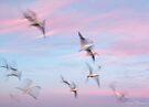 Seagulls by Pene Stevens