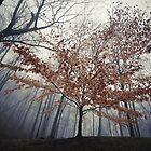 Stand Alone by DChungaPhoto