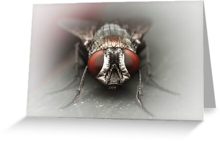 Portrait Of A Fly by Kerrod Sulter