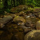 Macquarie Rivulet  by Kerrod Sulter