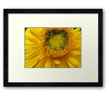 Daylight Framed Print