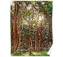SEE THE WOOD THROUGH THE TREES Poster