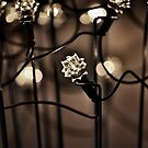 Christmas Bokeh by John Dalkin