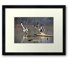 Riverine roost Framed Print