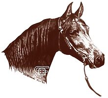 Red Frontier Arabian Horse Drawing 1985 by RedFrontier