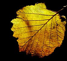 Autumn Leaf by Robyn Carter