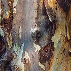 Bark Obsessions 1 by Paul Weston