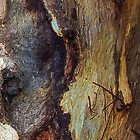 Bark Obsessions 1 (for iPhone and iPod) by Paul Weston