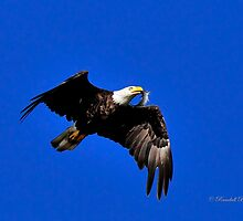 Eagle fish in Mouth by Randy Branham