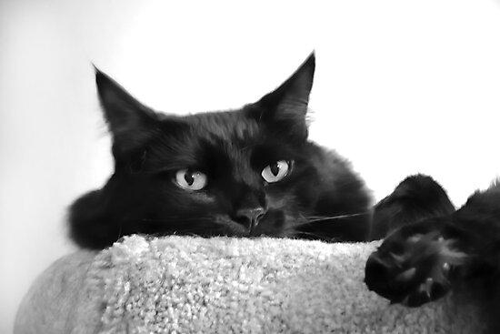 Pooh Bear in Black & White by heatherfriedman