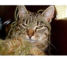 Valuable cat Photographic Print