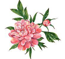 Pink peony by Evgeniia Zagreeva