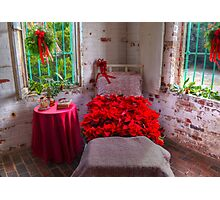 Bed Of Poinsettas Photographic Print