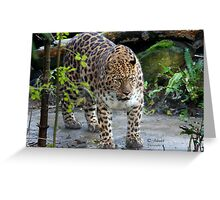 On the edge of extinction..The Amur leopard Greeting Card