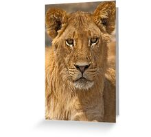 Young Lion (Panthera leo) Greeting Card