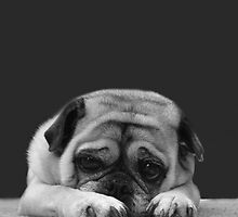 portrait of a pug by pugfish