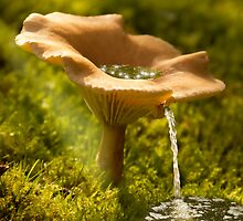 Mushroom Water Source by JonnisArt