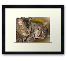 Sandy and Buster Brown Sleeping Framed Print