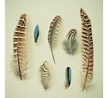 The Feather Collection Photographic Print