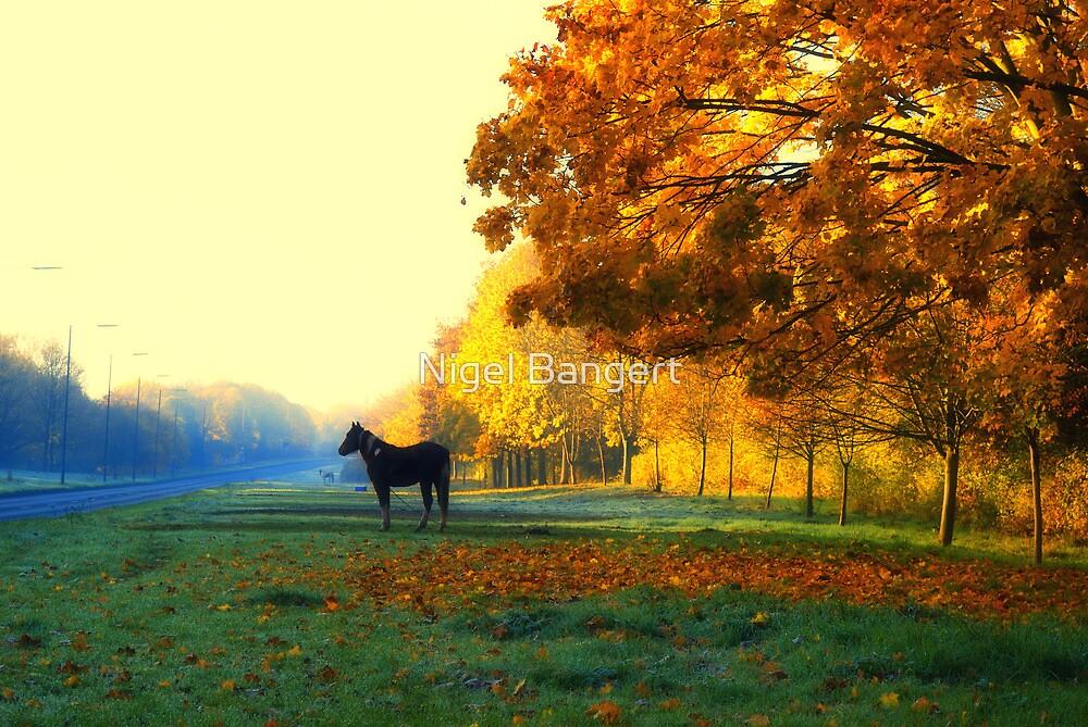 Autumn in Harlow by Nigel Bangert