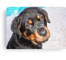 Female Rottweiler Puppy Making Eye Contact Canvas Print