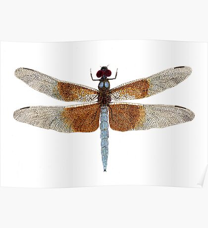 Female Widow Skimmer Dragonfly Poster