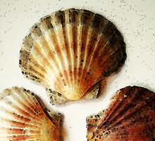 Scallop Shells - Beach Sea Art by Sharon Cummings