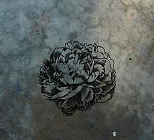 Peony on Concrete by Pierre-Etienne Vachon