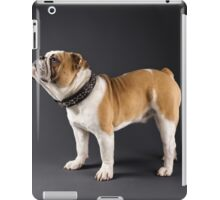 ENGLISH BULLDOG IN SPIKED COLLAR iPad Case/Skin