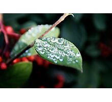 Dew Drops Photographic Print