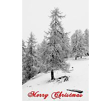 Winter Tree Photographic Print