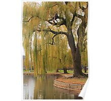 Weeping Willow in the Boston Public Gardens Poster