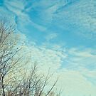 Winter Sky by Sharlene Rens